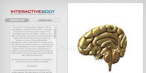 Interactive Body Ekran Görüntüsü