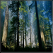 Yagmur Ormanlarina Yolculuk Android