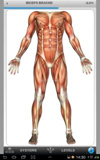 Anatomi Oyunu Anatomicus Resimleri