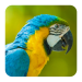 Bird Sounds Android