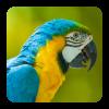 Android Bird Sounds Resim
