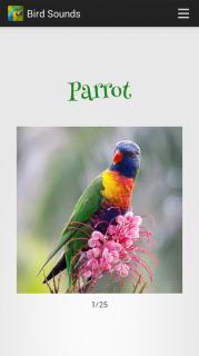 Bird Sounds Resimleri