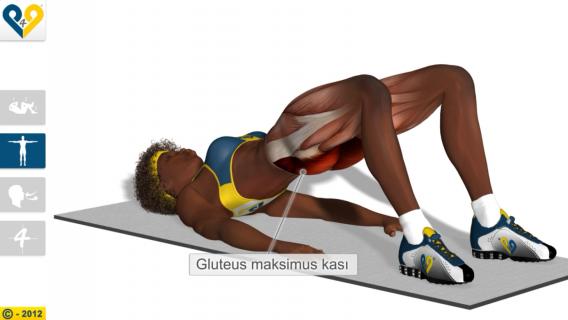 Kalça Egzersizleri Resimleri