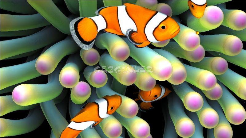 Sim Aquarium Live Wallpaper Ndir Android Gezginler Mobil