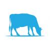 Android Sütiş Çiftliği Resim