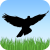 Android Kuş Sesleri Resim