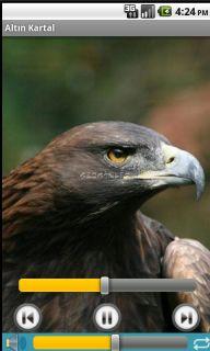 Kuş Sesleri Resimleri