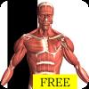 Android Visual Anatomy Free Resim