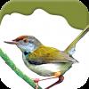 iPhone ve iPad Birds on Planet Earth Resim
