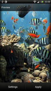 Okyanus Canlı Duvar Kağıdı Resimleri