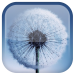 Galaxy S3 Dandelion LWP Android