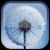 Android Galaxy S3 Dandelion LWP Resim